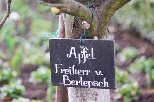 Seligenstadt - Schild an einem Apfelbaum