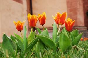 Seligenstadt - Blumen im Klostergarten